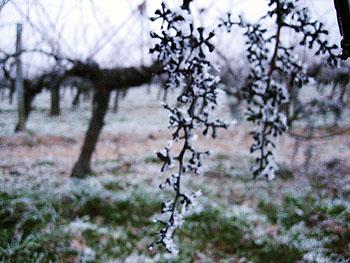 Gel - Blayais, Décembre 2006