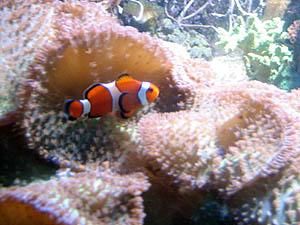 Qu'il est beau mon poisson rigolo! - August 2006