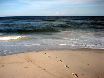 The other side of the ocean - Assateague, August 2006